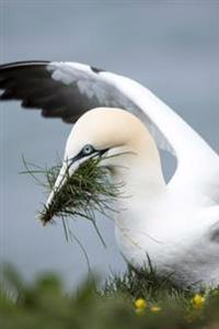 Gannet in the Nest by the Shore Journal: Take Notes, Write Down Memories in This 150 Page Lined Journal