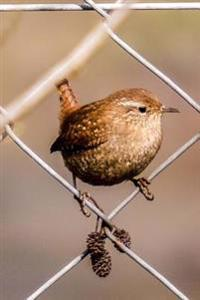 A Little Brown Wren on a Chain-Link Fence Bird Journal: 150 Page Lined Notebook/Diary