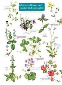 Guide to flowers of walks and waysides
