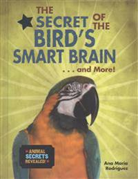The Secret of the Bird's Smart Brain... and More!