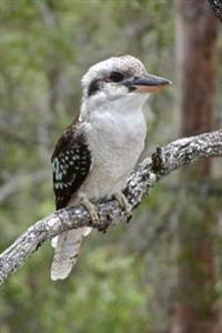 Kookaburra Kingfisher Bird on a Tree Branch Australia Journal: 150 Page Lined Notebook/Diary