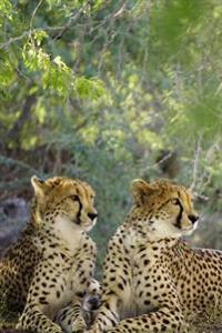 Two Elegant Curious Cheetahs Big Cats Journal: 150 Page Lined Notebook/Diary