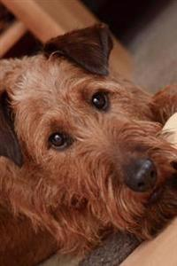 Irish Terrier Relaxing Inside Journal: Take Notes, Write Down Memories in This 150 Page Lined Journal