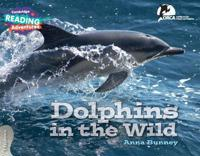 Dolphins in the Wild - Explorers