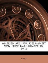 Ameisen aus Java. Gesammelt von Prof. Karl Kraepelin, 1904.