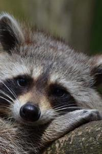 Raccoon Ready for a Nap Journal: Take Notes, Write Down Memories in This 150 Page Lined Journal