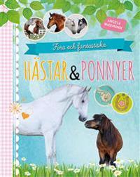 Fina och fantastiska hästar och ponnyer