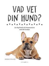Vad vet din hund?: lär dig förstå och kommunicera med ditt husdjur