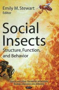Social Insects:
