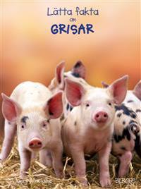 Lätta fakta om grisar
