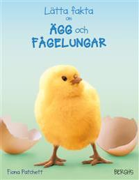Lätta fakta om ägg och fågelungar