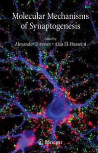 Molecular Mechanisms of Synaptogenesis