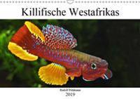 Killifische Westafrikas (Wandkalender 2019 DIN A3 quer)