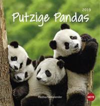 Putzige Pandas Postkartenkalender - Kalender 2019