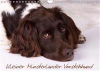 Kleiner Münsterländer Vorstehhund (Wandkalender 2019 DIN A4 quer)