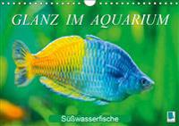 Glanz im Aquarium: Süßwasserfische (Wandkalender 2019 DIN A4 quer)
