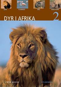 Dyr i Afrika-Løve, flamingo, gnu, næsehorn