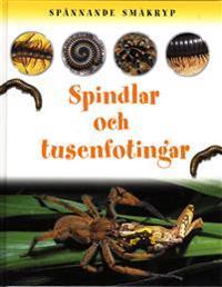 Spännande småkryp Spindlar och tusenfotingar