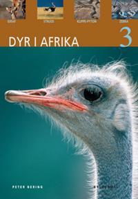 Dyr i Afrika-Giraf, struds, klippe-pyton, zebra
