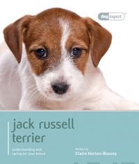 Jack Russell Terrier - Dog Expert