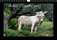 Donkeys - forgotten pets (Wall Calendar 2019 DIN A4 Landscape)