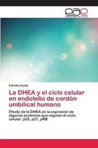 La DHEA y El Ciclo Celular En Endotelio de Cordon Umbilical Humano