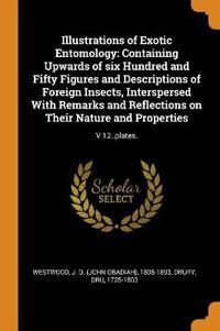 Illustrations of Exotic Entomology