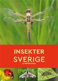 Insekter i Sverige & Nordeuropa