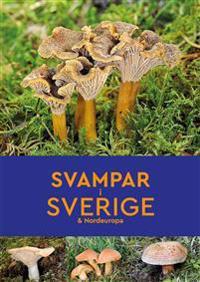 Svampar i Sverige & Nordeuropa