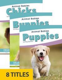 Animal Babies (Set of 8) -  - böcker (9781641858113)     Bokhandel
