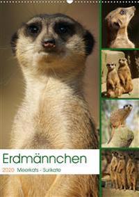Erdmännchen-Meerkats-Surikate (Wandkalender 2020 DIN A2 hoch)