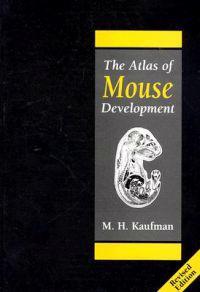The Atlas of Mouse Development