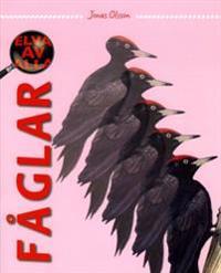 Elva av alla Fåglar - Årskurs 3 - 6, Sfi, Sv2