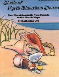 Shells North American Shores