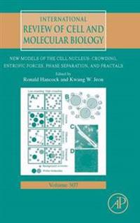 New Models of the Cell Nucleus: Crowding, Entropic Forces, Phase Separation, and Fractals