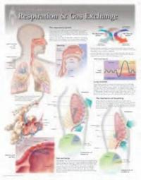 Respiration & Gas Exchange Wall Chart