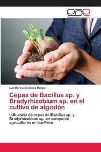Cepas de Bacillus Sp. y Bradyrhizobium Sp. En El Cultivo de Algodon