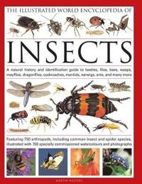 The Illustrated World Encyclopedia of Insects: A Natural History and Identification Guide to Beetles, Flies, Bees, Wasps, Springtails, Mayflies, Stone