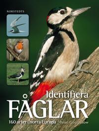 Identifiera fåglar : 160 arter i norra Europa