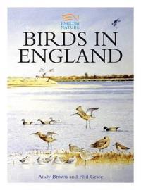 Birds in England