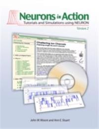 Neurons in Action 2