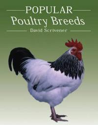 Popular Poultry Breeds