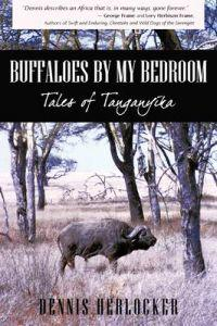 Buffaloes by My Bedroom
