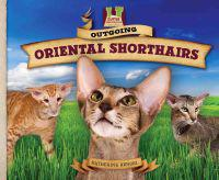 Outgoing Oriental Shorthairs