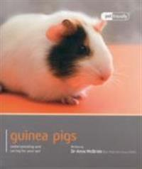Guinea Pig: Understanding and Caring for Your Pet