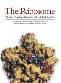 The Ribosome: Structure, Function, Antibiotics, and Cellular Interactions