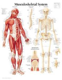 Musculoskeletal, Paper Chart