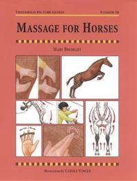 Massage for Horses