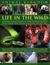 Animal Kingdom: Life in the Wild: How Wild Animals Survive in Their Different Habitats, from Deserts and Jungles to Oceans and the Ski