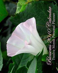 Blossoms 2010 Calendar